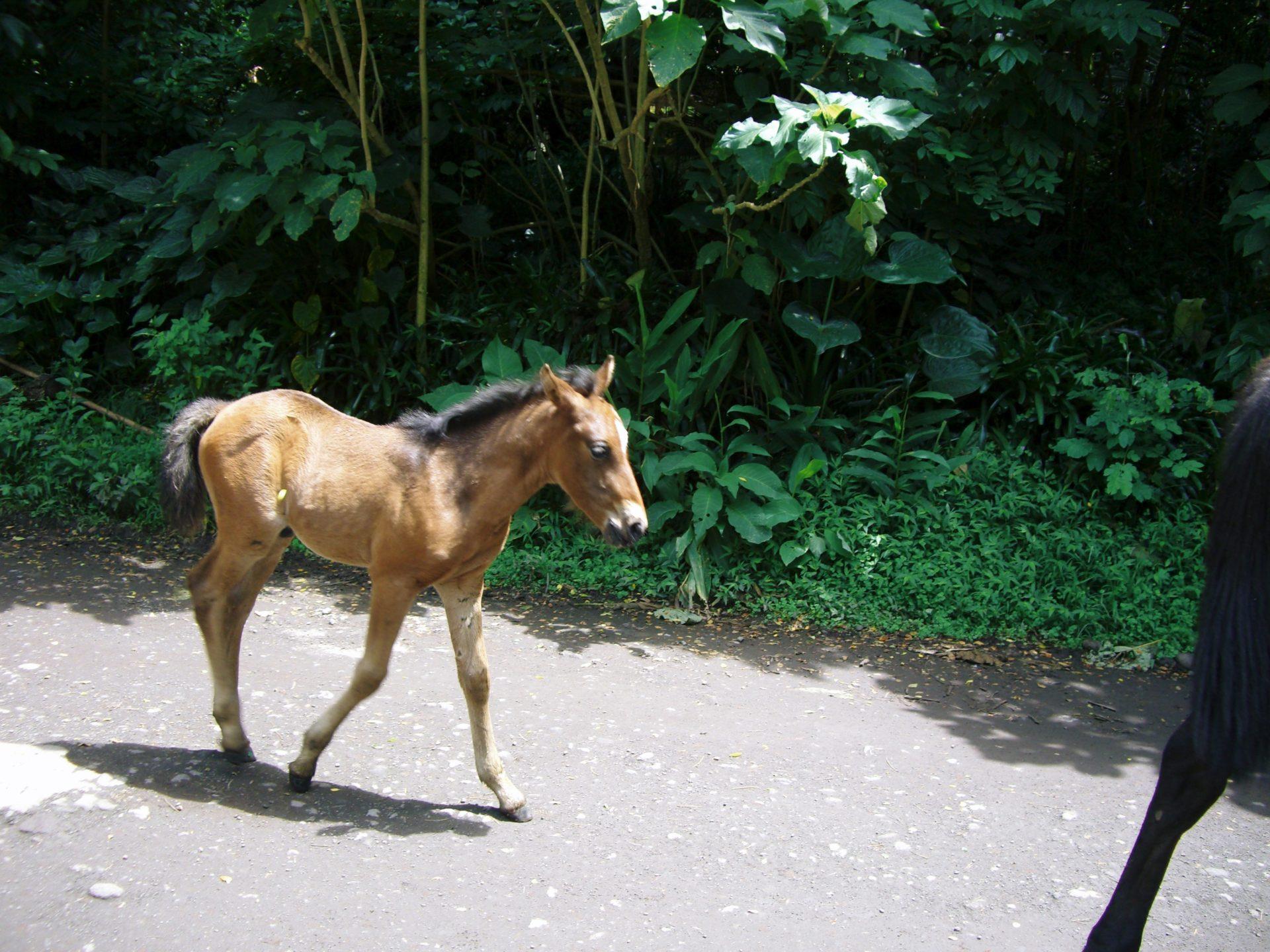 アロハ哲学 HUNAの教えの中での 馬は、ALOHA 愛を象徴する動物です